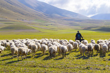 Pastore Con Gregge Di Pecore S...