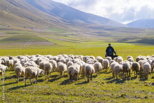 Foto pastore con gregge di pecore sui monti Sibillini, Italia