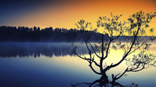 Lonely Tree Growing In A Pond ...