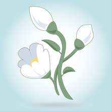 Lovely White Flower Snowdrop On White - Nice Spring Blossom Country Icon - Background For Easter Wish - Group Of Yellow Flowers In Blue Circle - Flatten Isolated Illustration Master Vector