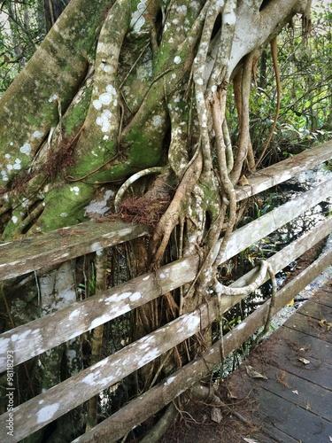 Spoed Fotobehang Onweer Cypress Tree Overgrowth