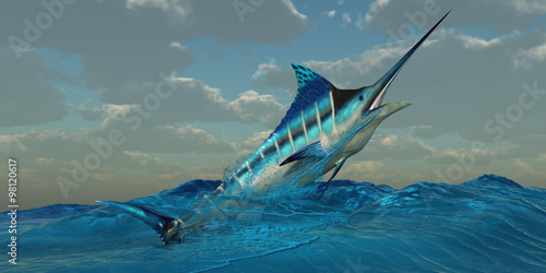 Photo Blue Marlin Burst -The Blue Marlin is a predator and is a favorite game fish with deep sea anglers
