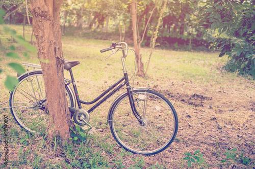 Fotobehang Fiets bicycle vintage in garden with sunlight