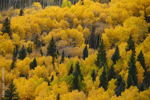 zolte-i-zielone-korony-drzew-iglastych-i-lisciastych-jesienia
