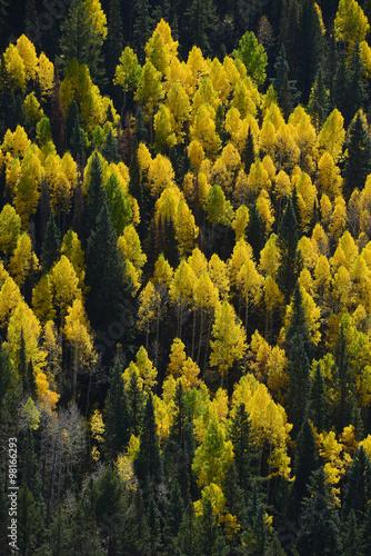 kolorowe-drzewa-jesienia
