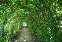 Green Tunnel In The Garden