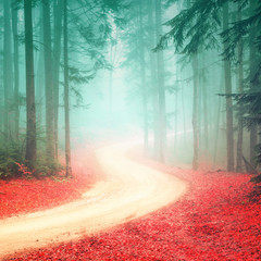 Fototapeta Popularne Lovely seasonal color foggy forest road. Magic color woodland with bright foggy road.