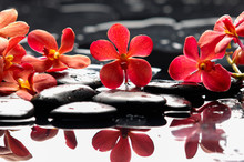 Beautiful Red Orchid With Ther...