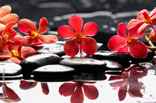 Poster Spa Beautiful red orchid with therapy stones