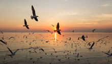 Silhouette Of Number Of Bird Flying Over Sea When Sunset
