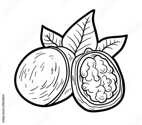 Картинка раскраска орех