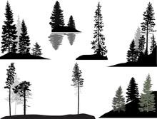 Set Of Dark Fir Trees On White