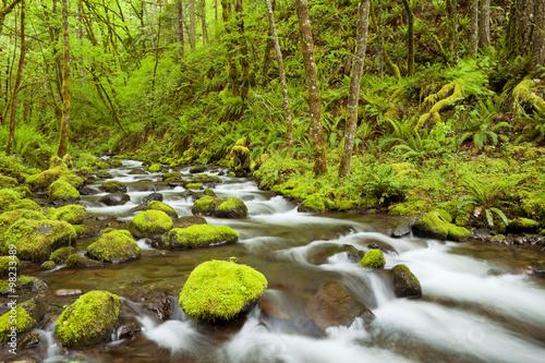 Gorton Creek through lush rainforest, Columbia River Gorge, USA Wallpaper Mural
