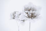 Beautiful spring flowers. Retro effect - 98233634