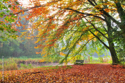 Fotografiet  Beautiful autumn view of a bench under a bright colored autumn tree in het Amsterdamse bos (Amsterdam wood) in the Netherlands