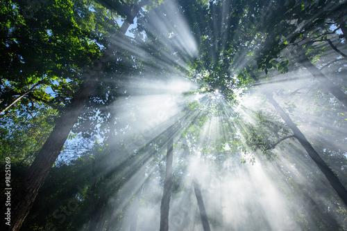 swiatlo-sloneczne-przebijajace-sie-przez-korony-drzew-w-lesie