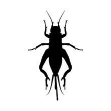 Cricket. Grig. Gryllus Campestris. Sketch Of Cricket.  Cricket Isolated On White Background
