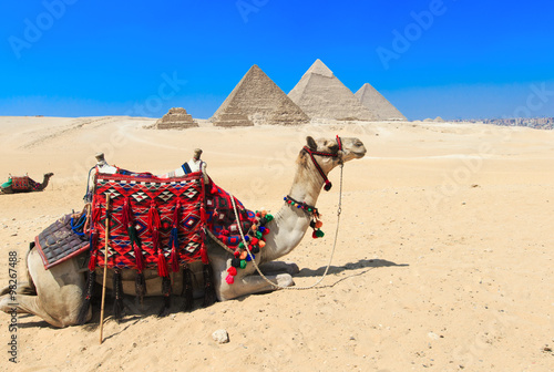 Poster Chameau pyramids with a beautiful sky of Giza in Cairo, Egypt.