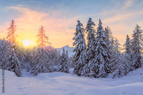 Tuinposter Purper Trees covered with hoarfrost and snow in mountains