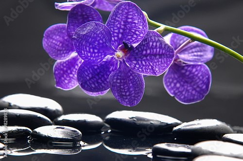 Still life with purple orchid and wet stones