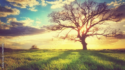 Fotobehang Bomen Spring sunset, lonely tree in the field