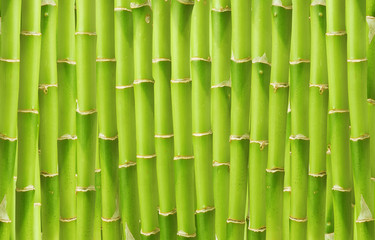 Fototapeta Do łazienki beautiful green bamboo background