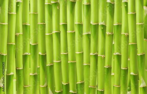 piekny-zielony-bambusowy-tlo