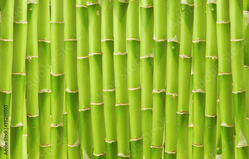 beautiful green bamboo background - 98296063
