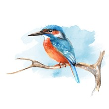 Kingfisher On Branch 2. Watercolor Bird