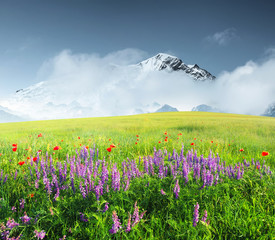 Fototapeta Inspiracje na lato Field with flowers in mountain valley. Natural summer landscape.