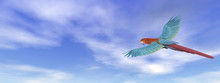 Scarlet Macaw, Parrot, Flying ...