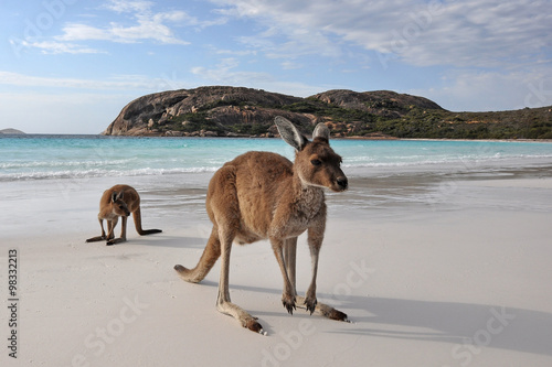 Stickers pour portes Kangaroo Kangourou Cape Legrand national park 6