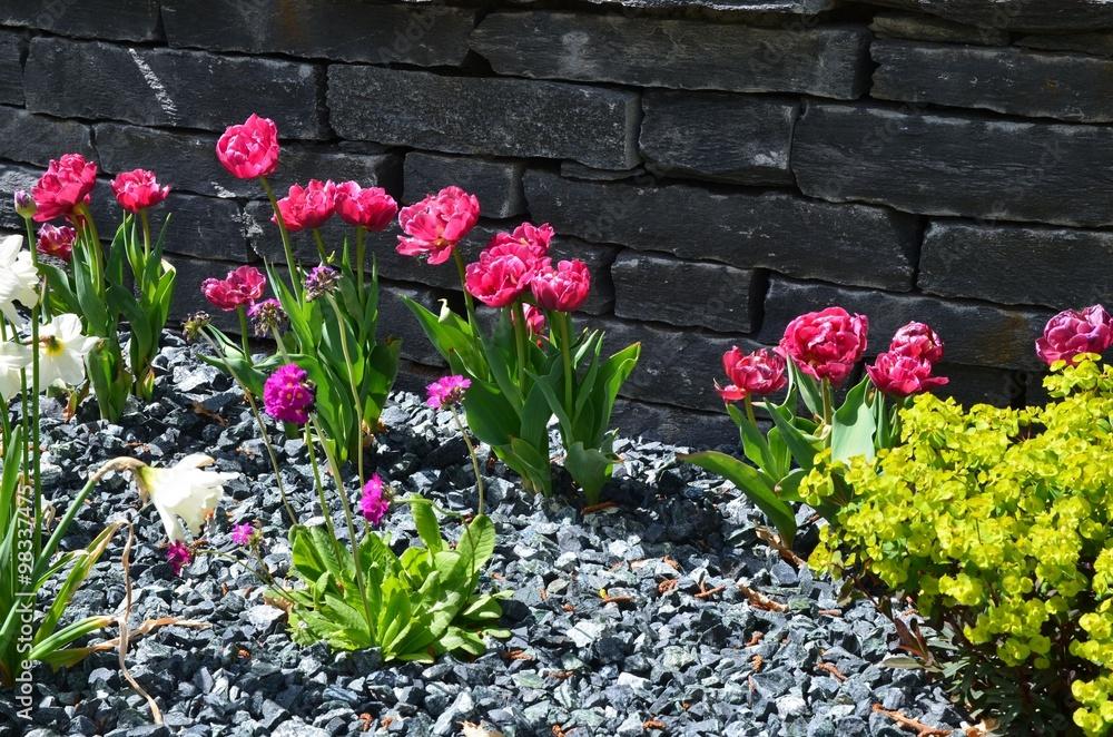 Tulpen Blühen Im Steingarten Vor Steinmauer Trockenmauer