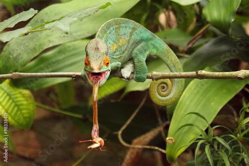 In de dag Kameleon Camaleão em Madagascar