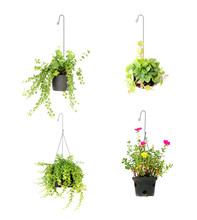 Hanging Basket Plant Isolated ...