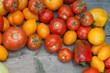 fresh dirty tomatoes only from a kitchen garden