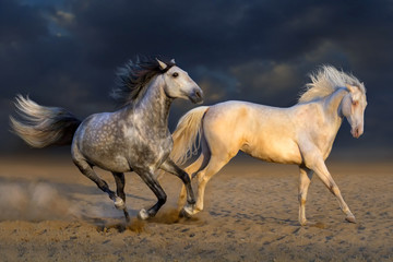 Two horse play in desert against dramatic sky