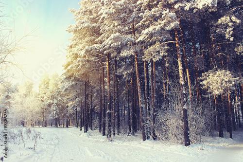 winter-wonderland-filtr-w-stylu-retro
