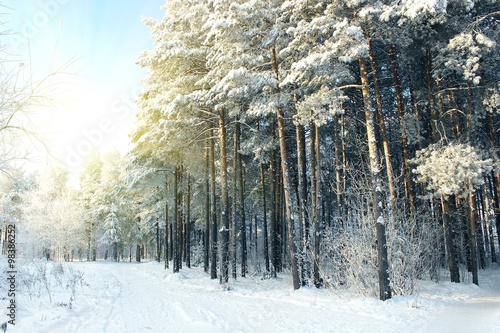 zimowy-las-na-wschod-slonca