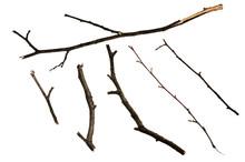 Dry Twigs