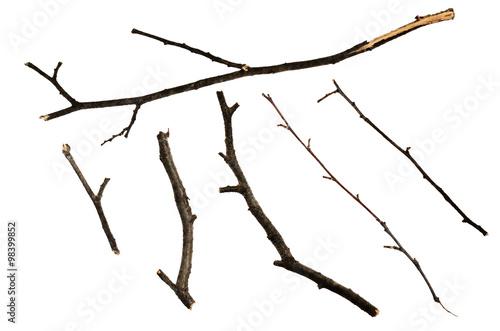 Dry twigs Wallpaper Mural