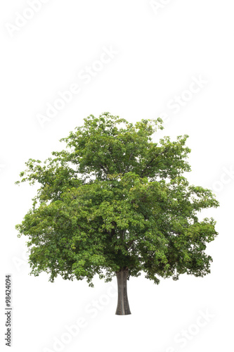 Photo  Tree isolated on a white background