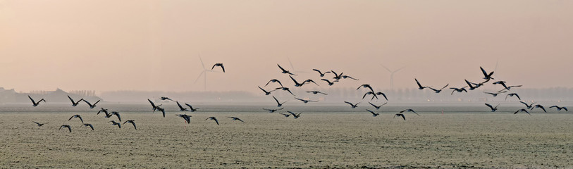 FototapetaFlock of geese flying over a field in winter
