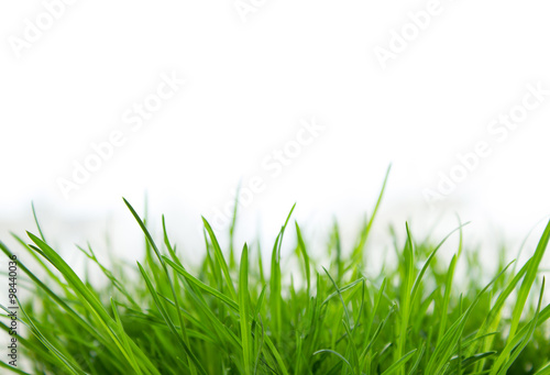 Deurstickers Gras Background with green grass