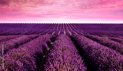Foto op Canvas Candy roze Lavender field Summer sunset landscape