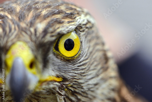 Falcon's Eye Canvas Print