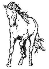 FototapetaEsquisse d'un cheval