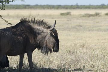 Afrika Namibia Etosha Wildlife