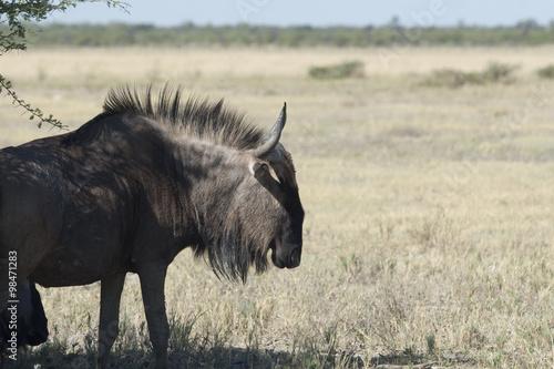 Staande foto Afrika Afrika Namibia Etosha Wildlife