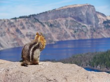 Golden-mantled Squirrel At Cra...